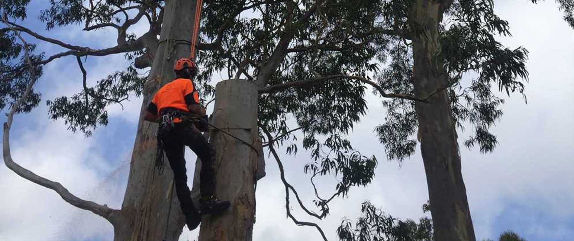 S&B-Tree-Services-work