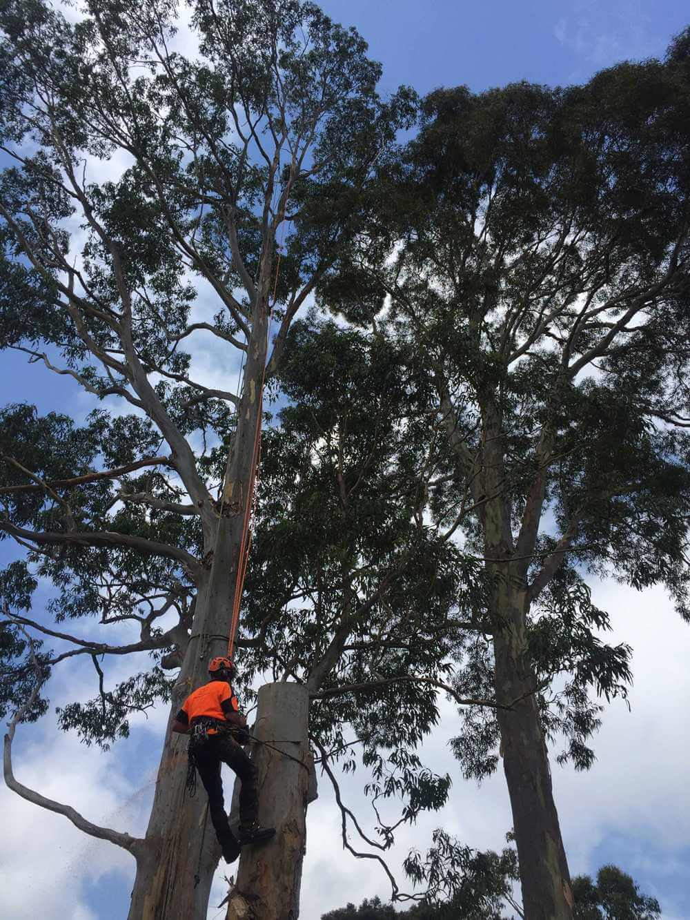 SB-Tree-Services-work-img-2