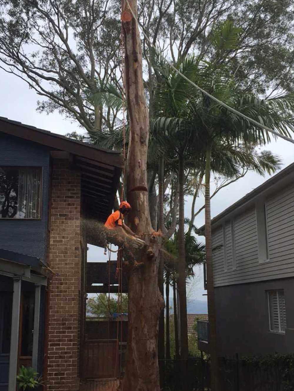 SB-Tree-Services-work-img-6